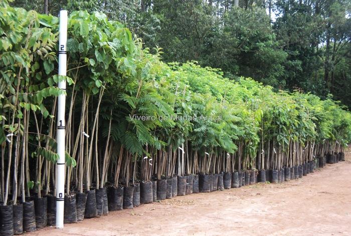 Resultado de imagem para imagem viveiro mudas de árvores
